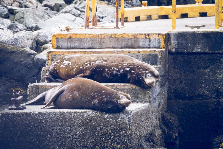 Seals relaxing on steps