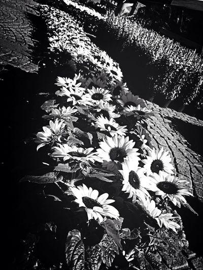 My Flower Love 🌸