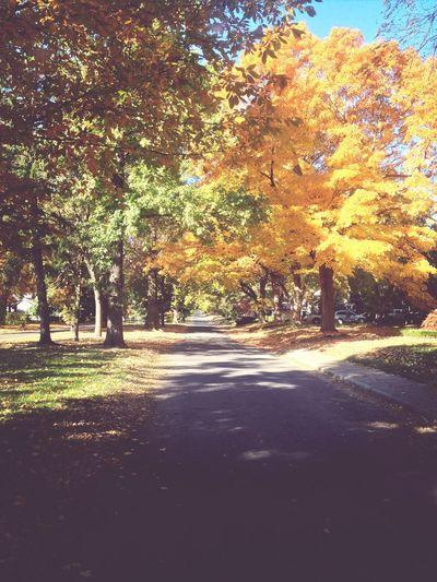 Autumn Leaves Fall Popular Photos