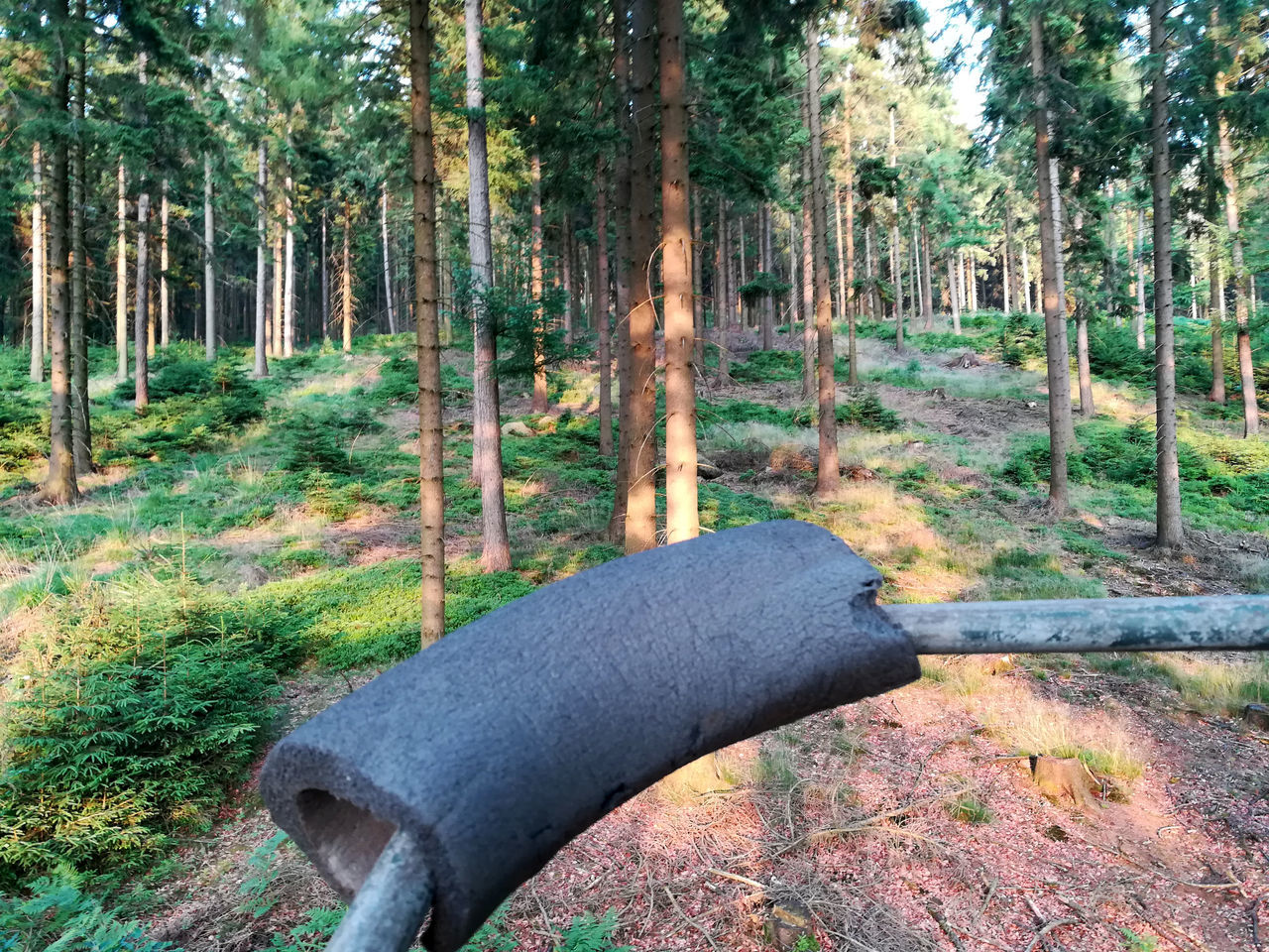 Beauty In Nature Day Forest Forestwalk Gun Circulation Gun Pad Hunter Chair Landscape Nature No People Outdoors Scenics Teutoburg Forest Teutoburger Wald Tree Tree Trunk Upstairs