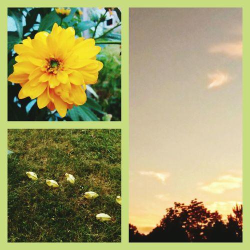 colage. yellow flower. yellow chicks. baby chicks.