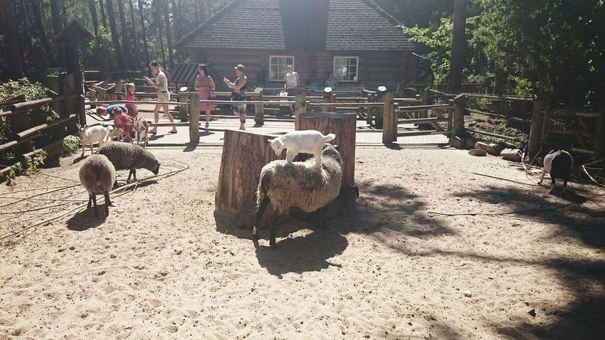 Zoo зоопарк Latvija Latvia латвия рига Mezaparks Riga Zoo межапарк Riga Zoo зоопарк