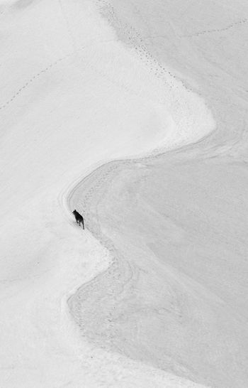 Wolf, 2013 Adventure Beauty In Nature Cold Temperature Day Explore Landscape Leisure Activity Minimal Minimalism Nature One Person Outdoors Powder Snow Searching Shadow Ski Holiday Snow Sunlight Track - Imprint Winter Winter Sport Wolf