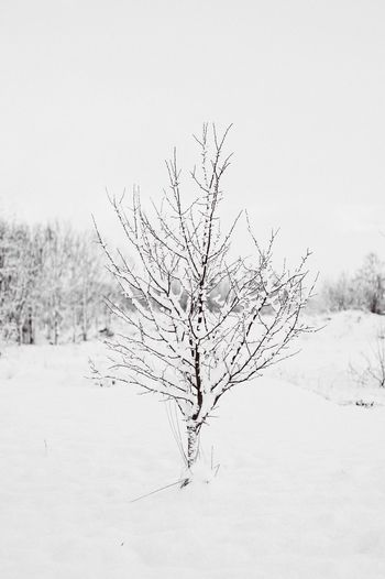 Winter tree Nature Plant Tree Land Sky Environment Beauty In Nature No People Outdoors Landscape Day Scenics - Nature Non-urban Scene