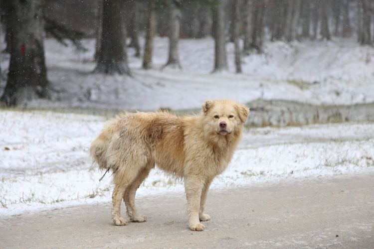 Full Length Of A Dog Against Winter Forest