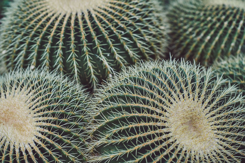 Spring in Kew Spring Springtime Spring Flowers spring into spring Spring Has Arrived Cactus Succulent Plant Barrel Cactus Growth Thorn Close-up No People Natural Pattern Sharp Plant Spiked Full Frame Beauty In Nature Backgrounds Green Color Nature Indoors  Focus On Foreground Pattern Spiky