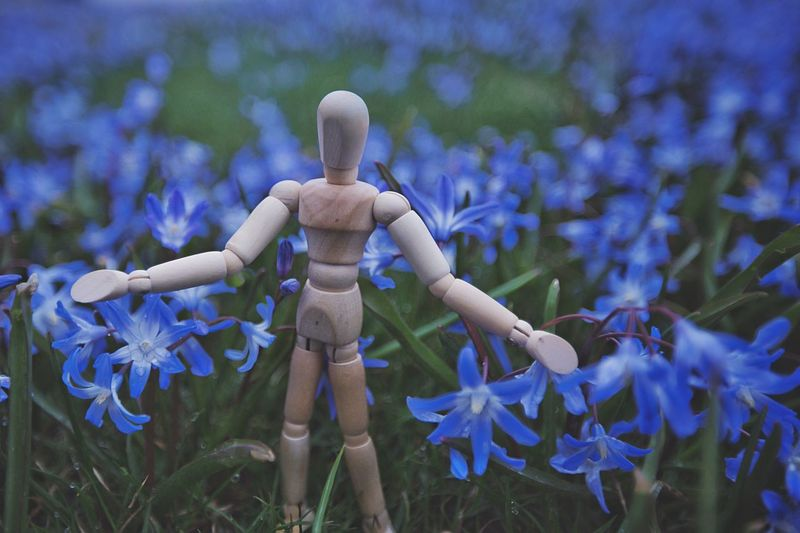 Woody loves summer Blue Flowers Woodyforest No People Close-up Blue Nature Day Art And Craft Plant Focus On Foreground Selective Focus Creativity Outdoors Human Representation