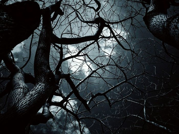 IPhoneography Iphone5s Myclicks Night Tree Branches Clouds And Sky Nature Peace And Quiet Horror