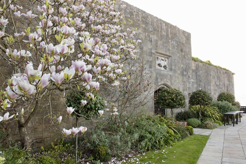 Magnolia Castle Wall Grass Table Trees Wastle Wall Castle Stone Wall Stone Magnolia Flower Magnolia Tree Magnolia Plant Architecture Built Structure Building Exterior Growth Flowering Plant Nature Flower Building Tree No People Day The Past Beauty In Nature History Wall Outdoors Sky Travel Destinations Freshness