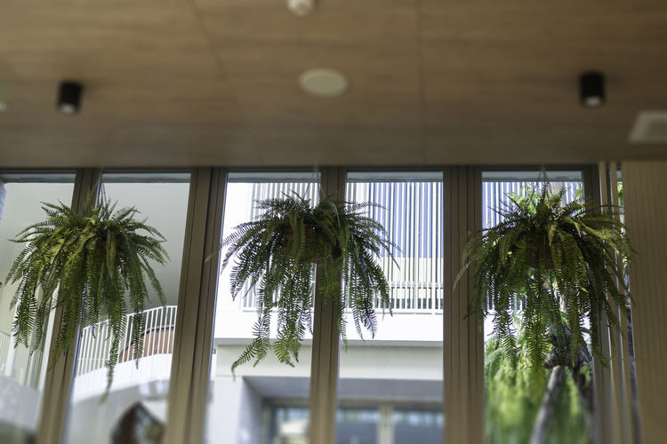Low angle view of palm trees against sky seen through window