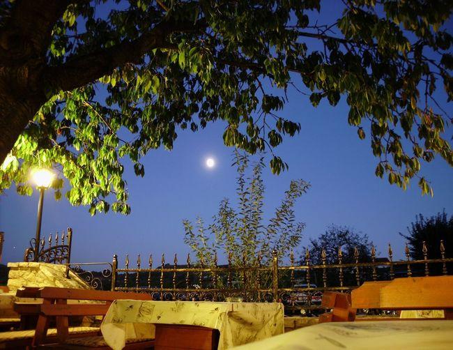 Astronomy Tree