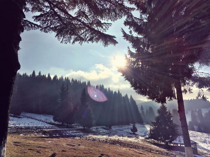 Low angle view of sun shining over trees on snowy field