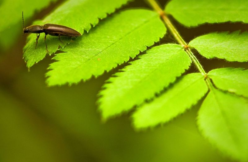 Animal Themes Animals In The Wild Beauty In Nature Close-up Day Green Color Growth Insect Leaf Nature No People One Animal Outdoors Plant