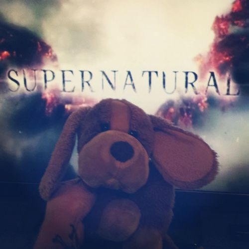 Too Hot to do anything outside. Catching up on some Supernatural . Heat Sun summer tv thewb thecw puppy stuffedanimal stuffedanimals dog hamburg mystery horror suspense fun party nerd hipster angel wings epic instatv puppyontour adorable