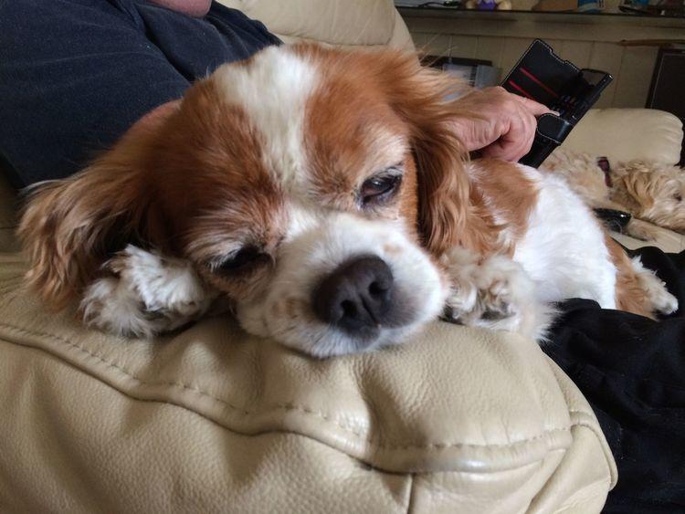Domestic Pets Mammal Canine Dog Domestic Animals One Animal