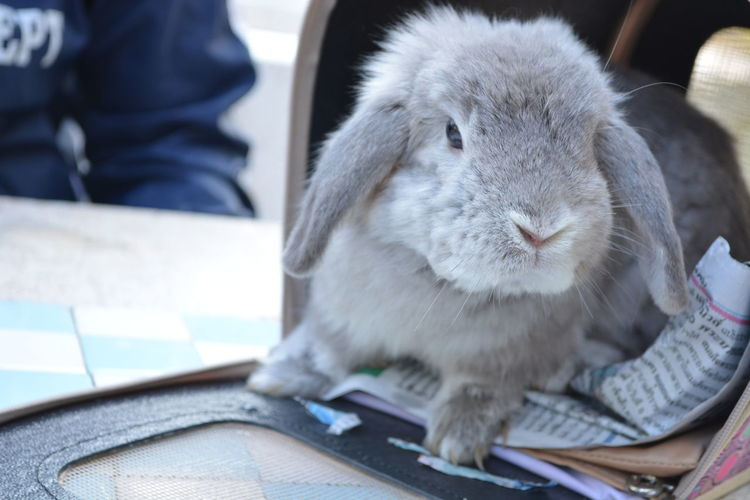 Close-up of rabbit on table