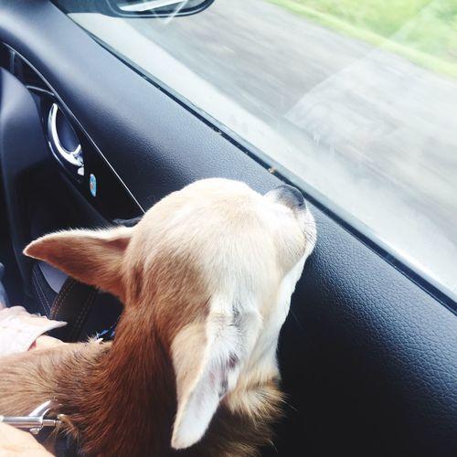 Болик едет на дачу 🏠 Dog Moscow