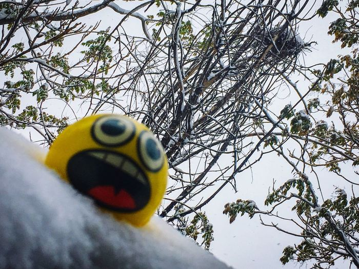No Way Emoji Ball Emoji Face Tree No People Yellow Branch Day Nature Snow Close-up Outdoors Animal Themes Squirrel Nest Snow Covered Nest Snowfall Denver Colorado  April Snow Spring Snow April 2017 Full Frame Yellow Ball Snow Covered Trees Spring Leaves Paint The Town Yellow