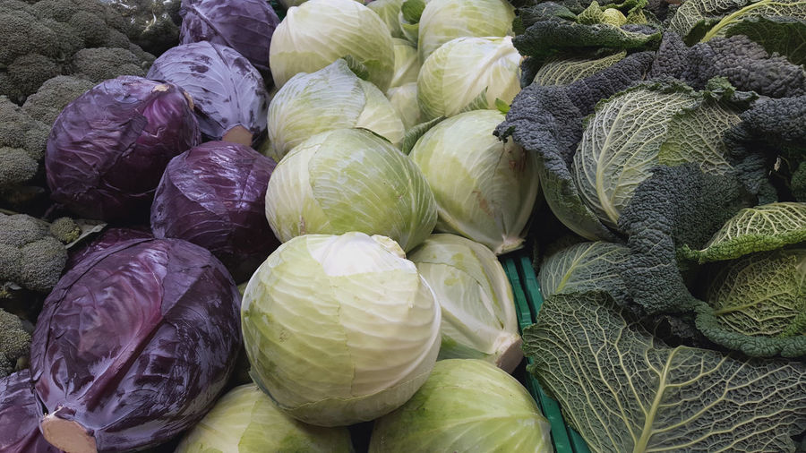 Abundance Cabbages Close-up Food For Sale France Freshness Full Frame Healthy Eating Horizontal Kale Large Group Of Objects Market Market Stall No People Red Cabbage Retail  Still Life Vegetable