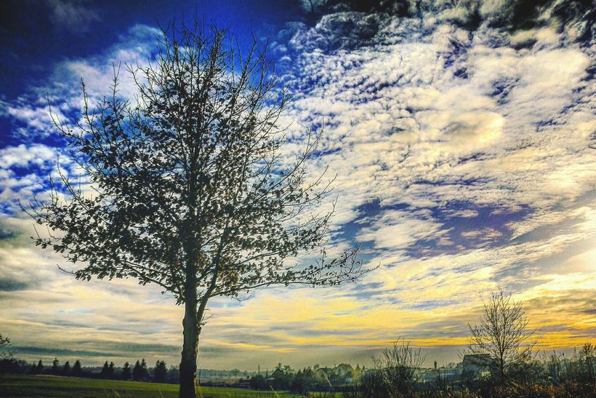 One tree and sunset #photo #travel #trip #proud #tree #sunset #photographie #mynewphoto #newmiracle #miracle #sky #village #countryside #iloveit First Eyeem Photo