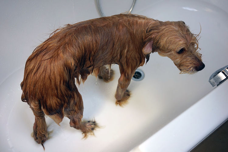 High angle view of dog standing in water