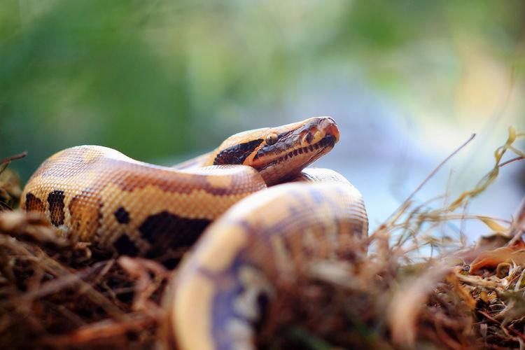 Close-up of snake on plants