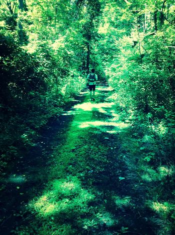 Taking a walk in the emerald forest. Forest Nature Relaxing Tree