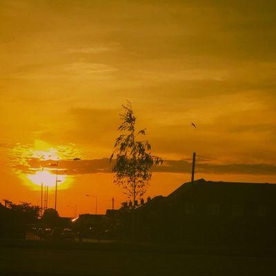 Sunset Relaxing Taking Photos