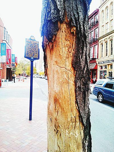 Street Outdoors Tree Dead Tree Dying Tree City Tree Sick Tree