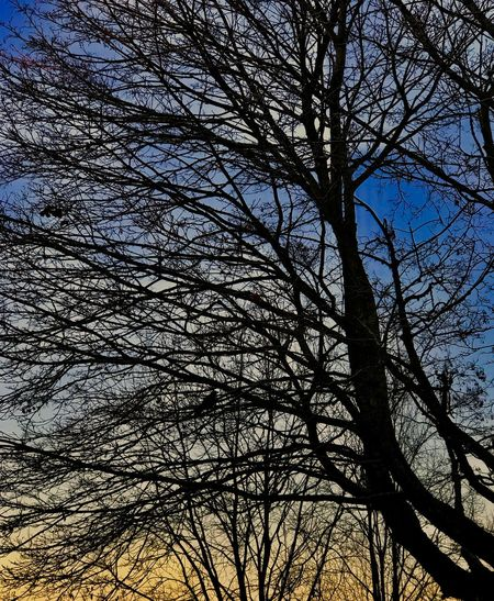 Can u c the Magpie? Colourful Black Pica Pica Magpie Bird Low Angle View Branch No People Bare Tree Silhouette Full Frame