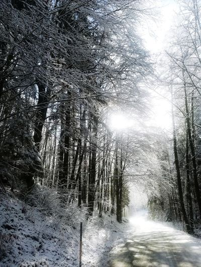 Forest Road in Austria Forestroad Winterroad Backgrounds Day Full Frame Nature Sunlight Low Angle View No People Winter Snow
