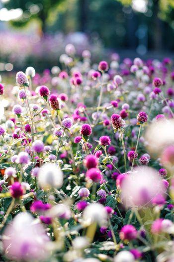 奥行き感 Flower