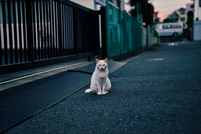 Portrait of stray cat sitting on road by building gate