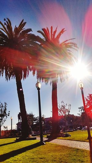 Arcata California Plaza. Taking Photos Magic... Loving Life! ! ! Hidden Gems  MY EYES EXPECT TO. WIN!!!