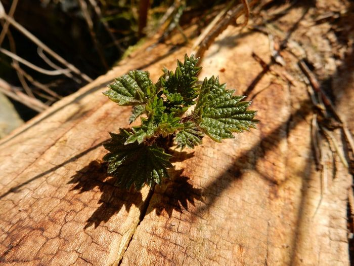 Close Up Nature Macro Photography Enjoying Life Outdoors Fallen Tree Forest Small Tree