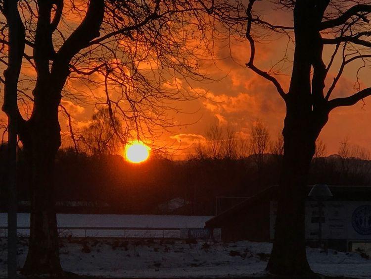 Morning Sunset Tree
