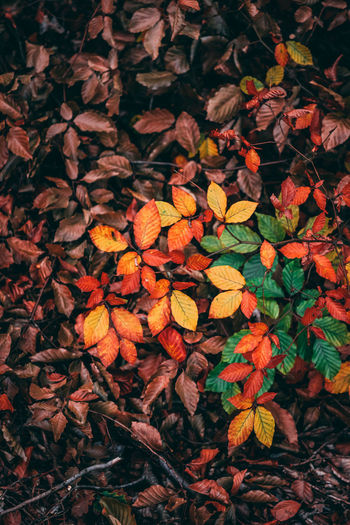 High angle view of autumn leaves on land