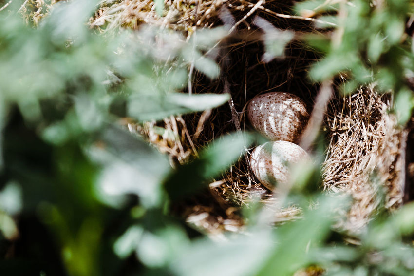 Animal Nest Beauty In Nature Close-up Day Field Focus On Background Food Food And Drink Forest Green Color Growth Land Leaf Nature No People Outdoors Plant Plant Part Selective Focus Tree