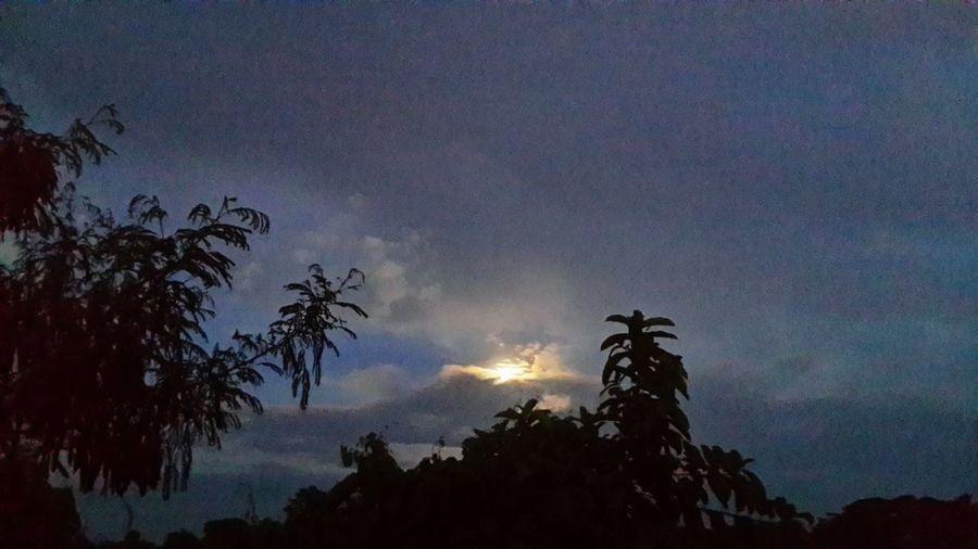 ยามเย็น Sun Silhouette Low Angle View Tree Sky Glowing Scenics Beauty In Nature Moon Tranquil Scene Tranquility Nature Growth Outdoors High Section Back Lit Dark Moonlight Majestic Atmosphere