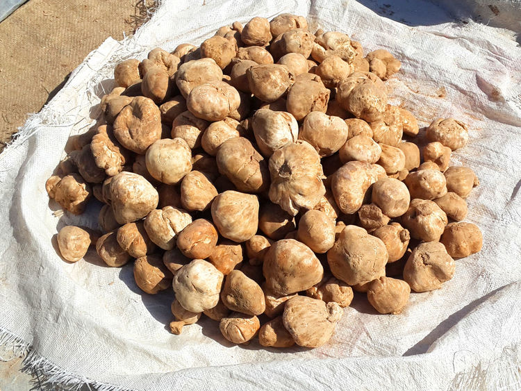 Truffle auction sale, in Samawa city Iraq Abundance Auction Sale Brown Close-up Day Food Food And Drink Freshness Healthy Eating Heap High Angle View Indoors  Large Group Of Objects Mashrooms Nature No People Nut - Food Ready-to-eat Truffle Vegetable