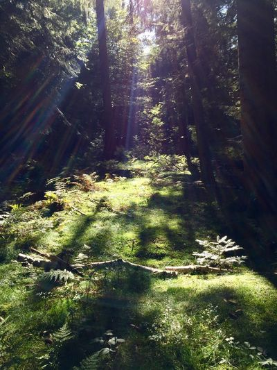 Nature Forest Beauty In Nature Tranquil Scene No Filter Green Color No People Day Landscape Trees Perfect Lighting Moss Sunlight Beatiful Nature Beautiful View Dreamy Dreamy Spot