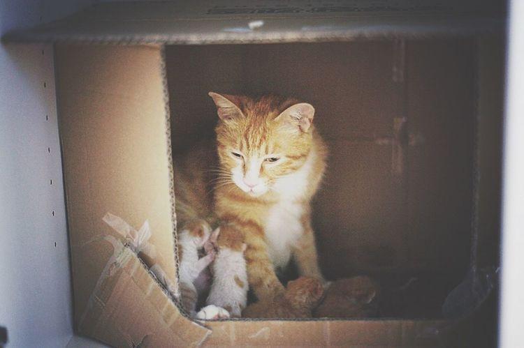 카레 길에서 데려온지 보름만에 5마리 순산했어요^^ Curry Cat Kitten Hello World Cat