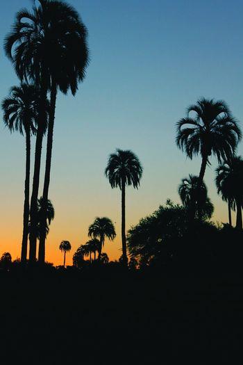 El palmar. Palmeras Palm Trees Entre Rios Argentina 👑🎉🎊👌😚😍