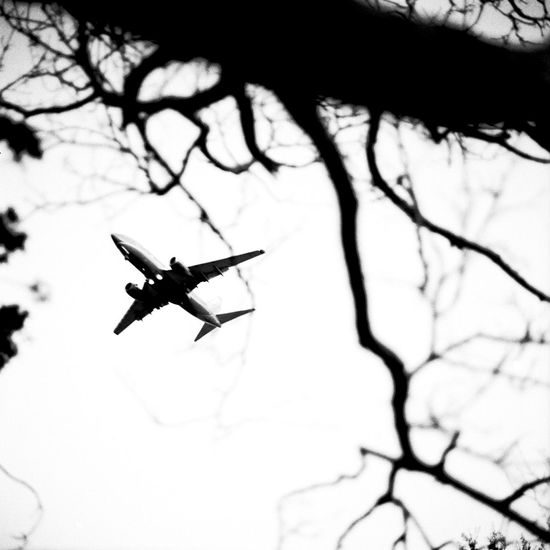 Transportation: Airplane in the sky Black And White Photography Branch Branches And Sky Day Flying Low Angle View No People Outdoors Plane Sky Transportation Tree Up