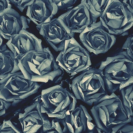 장미 Love Rosé