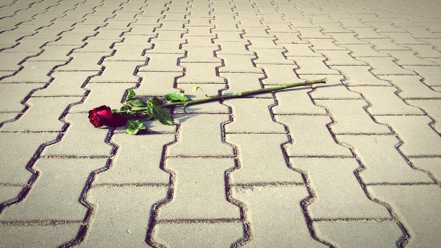 Red Rose Rose🌹