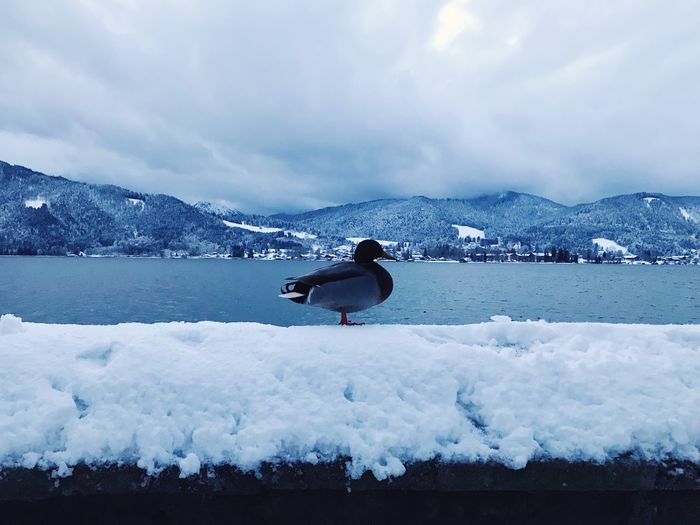 Bird perching on snow at lakeshore against cloudy sky