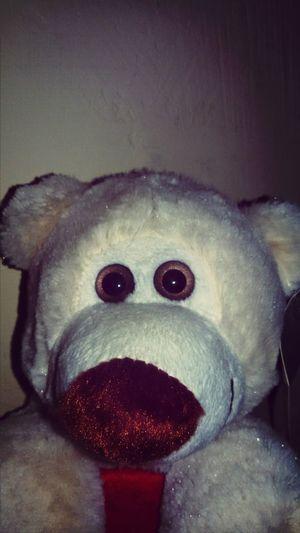 Urso Ursão Ursinho Feliz