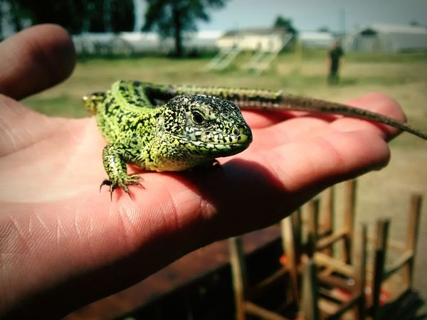Holiday POV Lizard Animal Nature Ukraine My Hand  My Hands Green Animal Green