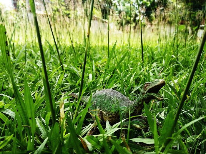 แฮ๊.... !! DinosaursAroundTheWorld Nature Grass Green Color Growth Outdoors One Animal Day Beauty In Nature No People Animal Themes Forest Plant Animals In The Wild Close-up Reptile Freshness